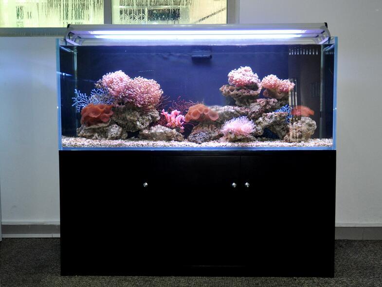 玻璃鱼缸图片